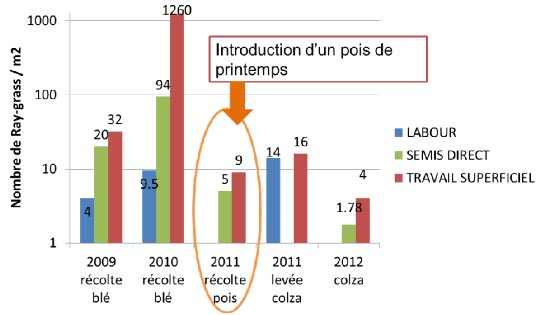 Evolution de l'infestation en ray-grass
