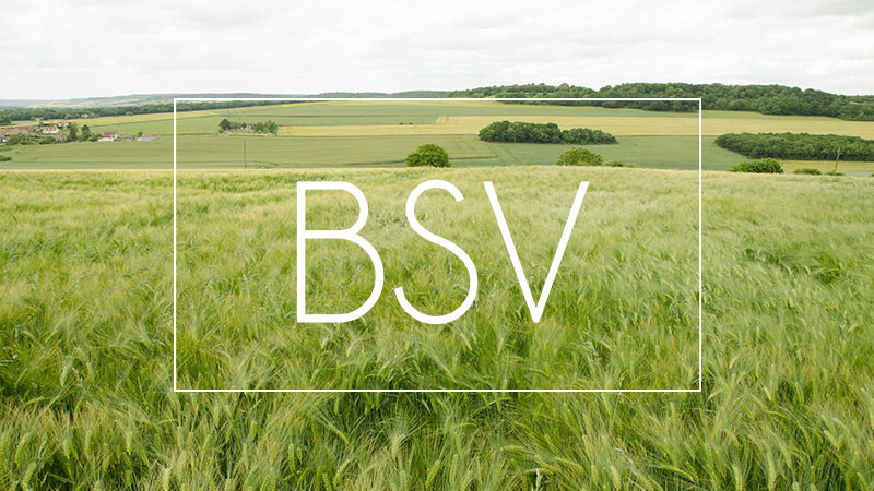 BSV Normandie